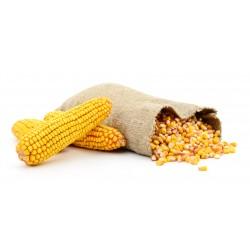 Kukurydza w Worku 25 kg
